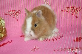 Комочек крольчонок в продаже