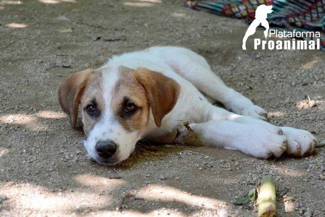 MORANGO - Cachorro para Adoção!