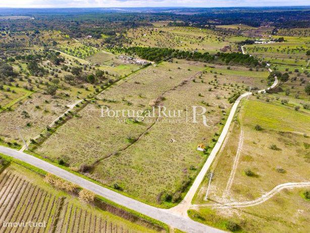 Vinhas do Cabeção - 7,175 hectares