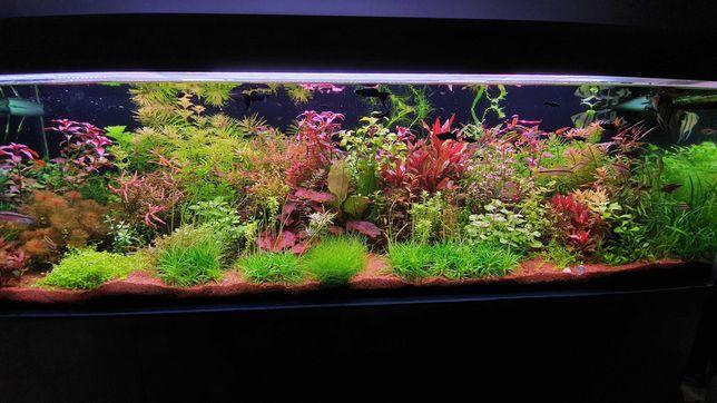 Rośliny akwariowe 16 gatunków - ponad 40szt