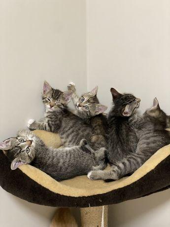 Отдам котенков в хоршие руки