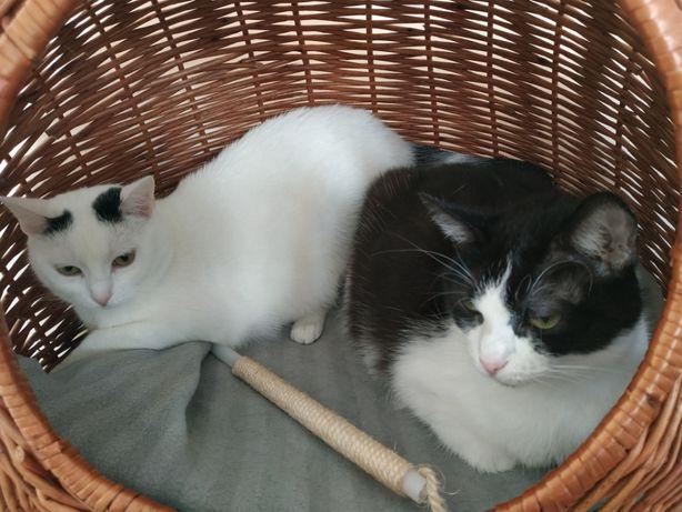 Kocie cuda polecają się do adopcji