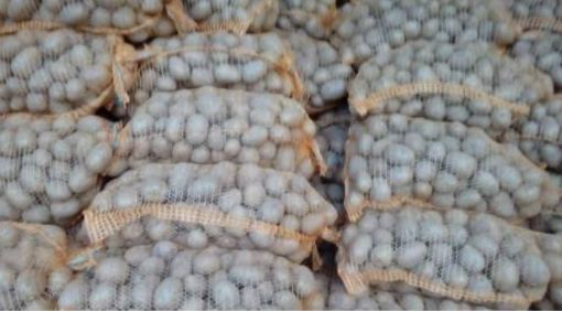 Ziemniaki jadalne 15 kg Vineta