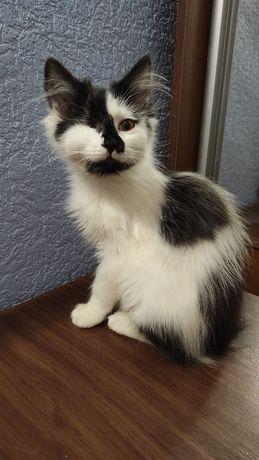 Отдам чёрно белого котёнка с одним глазом , девочка , 4 месяца