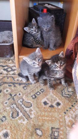 Маленькие котята ищут семью