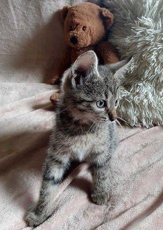 Oddam Kociaki w dobre ręce