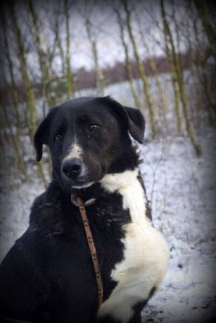 Zosia - delikatna psia dama czeka na nowy dom