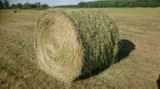 Sprzedam piękne siano z traw siewnych prosto z pola