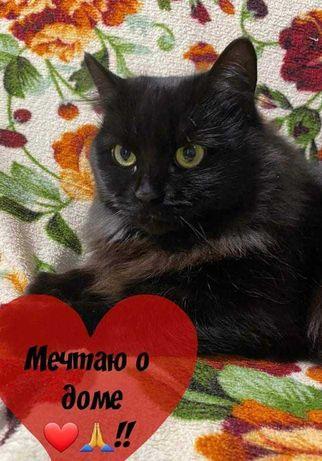 Чёрная пушистая кошечка Зося ищет любящее сердце!!