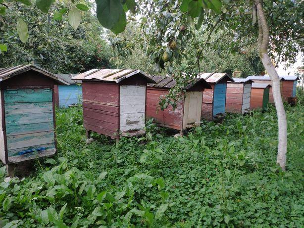 Продам бджоли з вуликами