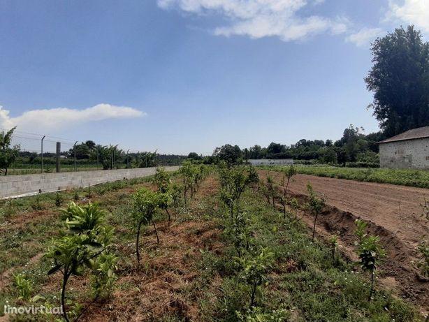 Terreno Agrícola - Rendufe