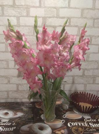 Квіти гладіолуси