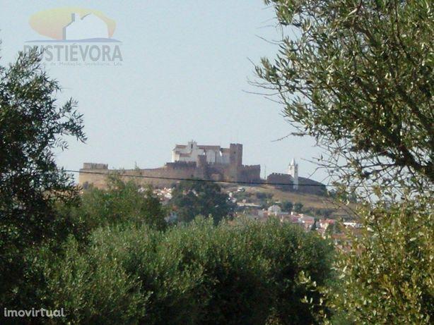Terreno | com Olival | em Arraiolos