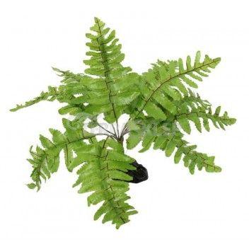 Roślina Paproć 20cm REPTI PLANET