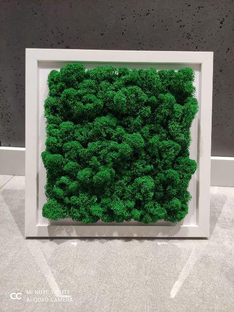 Obraz Mech Chrobotek 30/30 cm, Od ręki