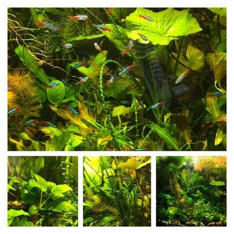 Аквариумні рослини