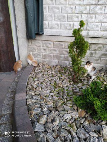 Kotki kociaki (malutkie)