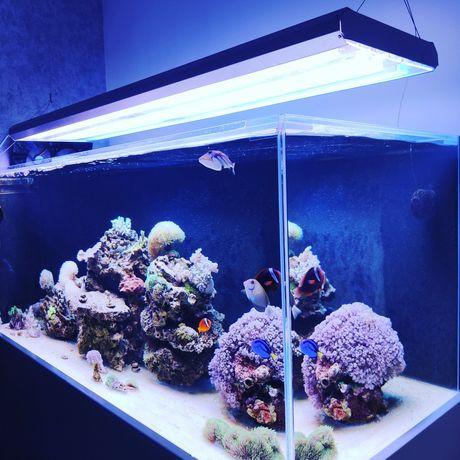 Akwarium morskie ful OptiWhite  540l 150x60x60 używane 6 miesięcy!