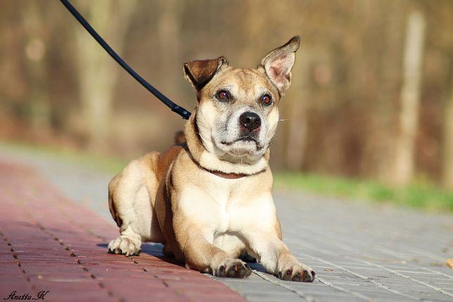 Tofik - żywiołowy wesoły pies