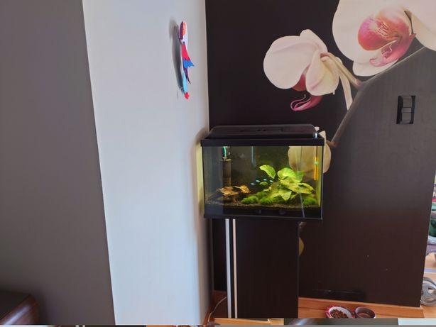 Akwarium 72L + szafka + małe akwarium 25L + akcesoria