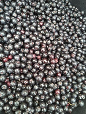 Aronia owoc 5 zł/kg na wzmocnienie, i pigwowiec mały owoc 12zł /kg