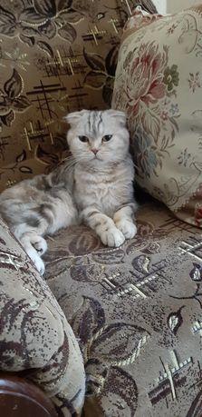 Украли кошку
