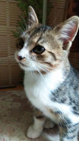 Котенок Тимка 3,5 месяца