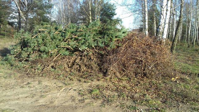 Gałęzie sosny i brzozy do odbioru w Mierzynku