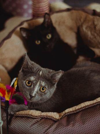 Kotka Lara i kocurek Croft szukają domu Do adopcji tylko razem !!!