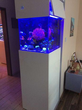 Akwarium Morskie: Sprzedam jako całość + Gratisy