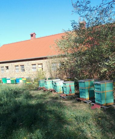 Pasieka, pszczoły, ule