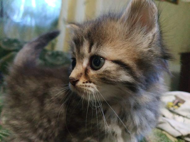 Милі котенята шукають дім
