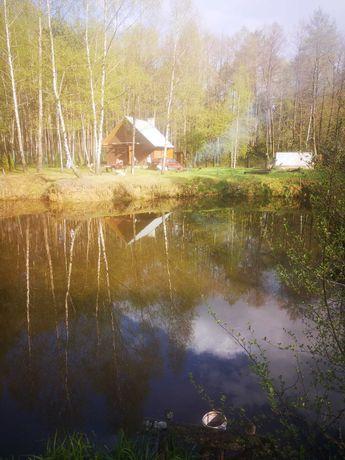 Roztocze wynajem,survival, dom w lesie, ognisko, staw,przyczepa,namiot