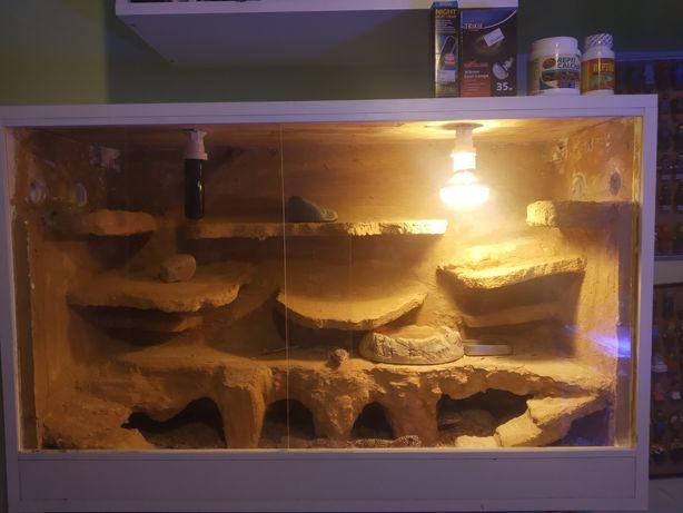 4gekony lamparcie +wyposażone ogrzewane terrarium na ścianę