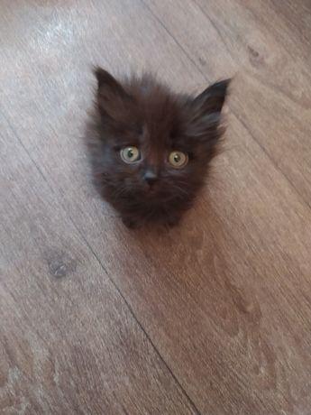 Красивый котёнок в хорошие руки