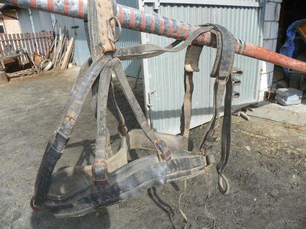 Sprzedam uprząz na konie - pólszorki - szory