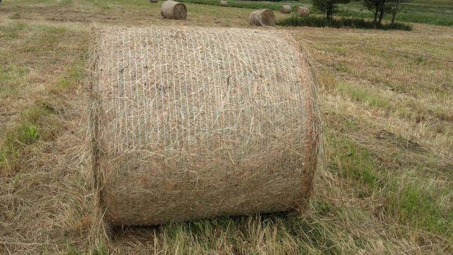 Siano z łąk siewnych niemiecka trawa horse typowa dla koni 1 pokos.o