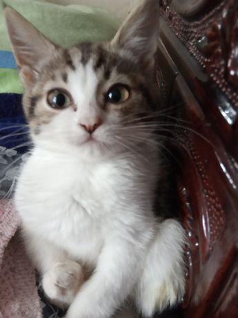 Кішечка- Сюрконик Цюркальце- Чудесна!