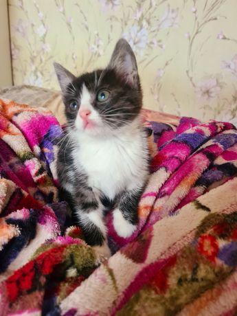Милый котенок девочка