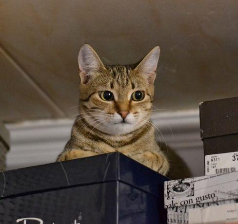 шпротне кошенятко дівчатко 8м