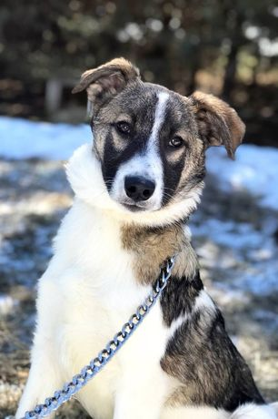 Собака, собачка, пёс, пес, щенок 7 месяцев