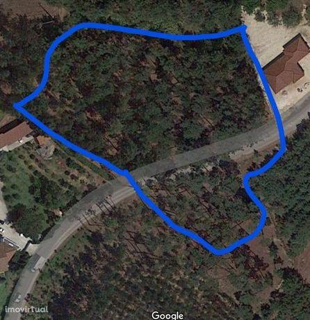 Terreno com 6200 m2 Maceirinha Leiria