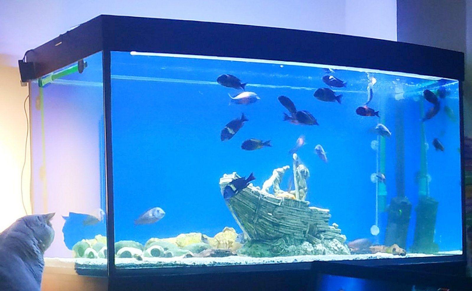 Продам действующий аквариум на 500 литров.