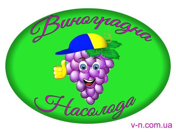 Лучшие черенки и саженцы винограда