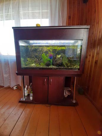 Akwarium z szafką i wyposażeniem