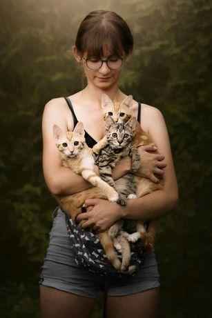 Wspaniałe trzy kociaki czekają na kochający dom!