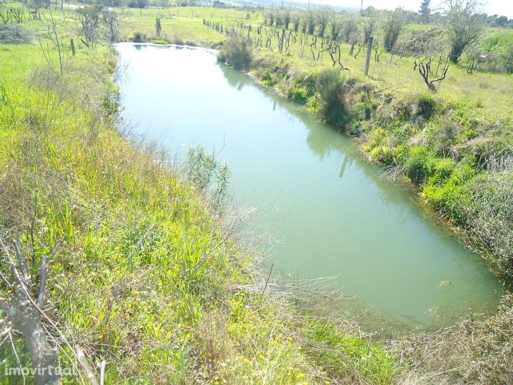 Terreno Rustico com casa agrícola em pedra e abundancia d...