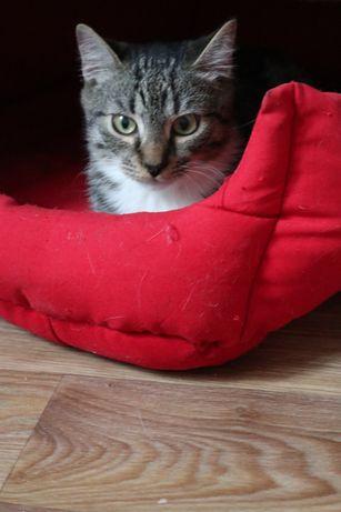 Полосатый котенок Шон