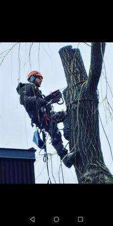 Спилить дерево срезать дерево удалить дерево кронировать спил обрезка