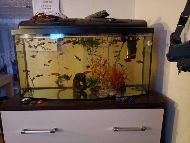 Duże akwarium z wyposażeniem.